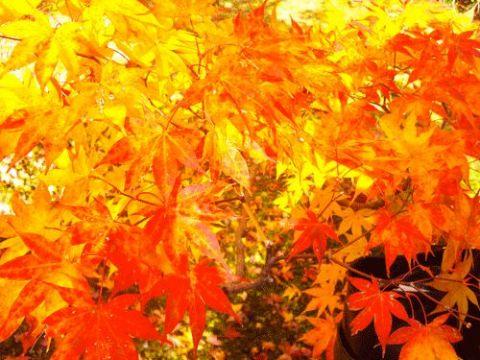 紅葉の季節 - 1