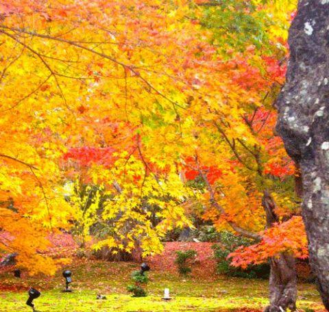 紅葉の季節 - 4