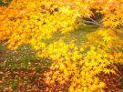 紅葉の季節 - 3
