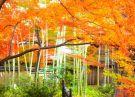 紅葉の季節 - 5
